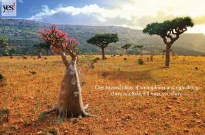 Rumi Nature Poster