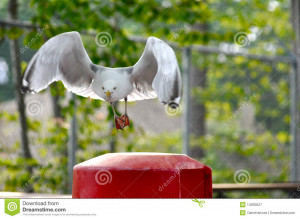 Funny Seagull Royalty Free Stock Photography Image