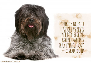 The Blissful Dog Quote for the Day – Bling It Out