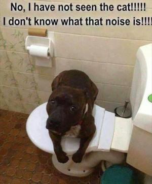 dog-cat-toilet-1.jpg