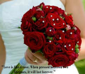 rose are symbol of Love and its best idea to send a romantic red rose ...