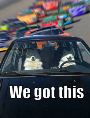 We Got This - Return to Funny Animal Pictures Home Page