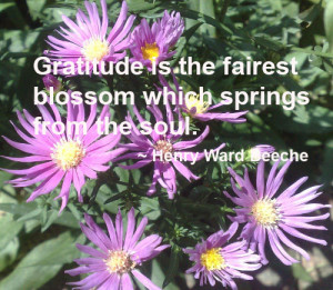 have read that folks who are habitually grateful people have more ...