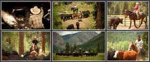 Dude Ranch Vacations Cattle