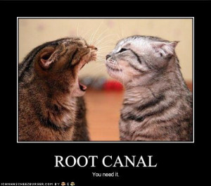 Root Canal Funny Memes