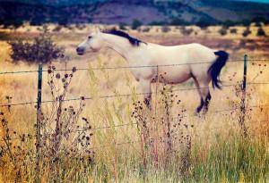 Animal Animals Beautiful Horse