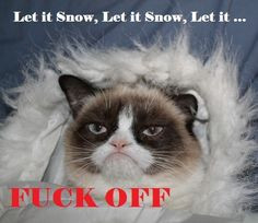 Grumpy Cat hates snow! More