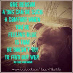 Dog Abuse/Neglect Quotes