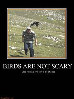 funny more photos quotes quotes funny birds watches birds parrots ...