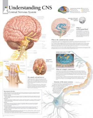 Understanding the Central Nervous System