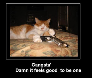 gangsta-cat-12819-funny-cat-with-gun.jpg
