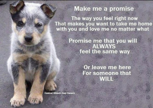 Pet Adoption Agency