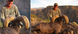 Field Judging Desert Bighorn Sheep-Ernie Meeske Unit 22 186 1/8 Net ...