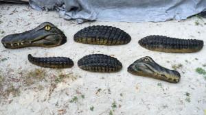 Alligator-wall_011.jpg
