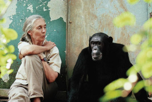 "... the Jane Goodall Institute by Seeing Disneynature's ""Chimpanzee"