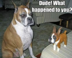 funny-shocked-surprised-dog-toy-soft-what-happened-pics