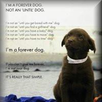goodbye forever quotes photo: Forever dog Foreverdog.jpg