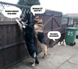 Police_Dogs_funny_picture