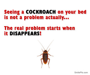 The real problem with cockroaches!