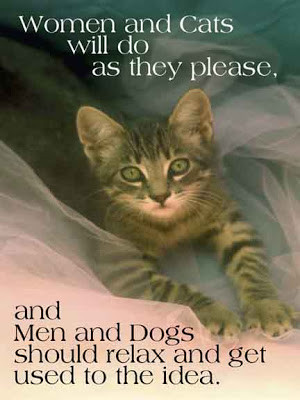 is cute about these cat quotes is they say more about us than the cats ...