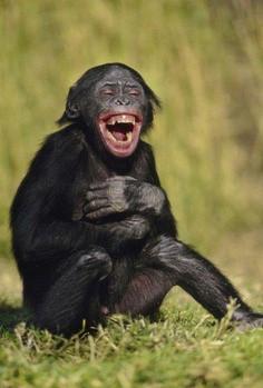 laughing-animal-19