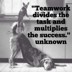 ... quote teamwork divid post quot dog teamwork quotes team success quotes