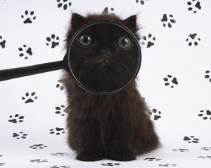 funny cat quotes clip art picture comments graphics cute dog pictures ...