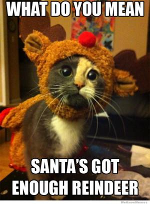 ... Dream Kitty meme – What do you mean Santa's got enough reindeer