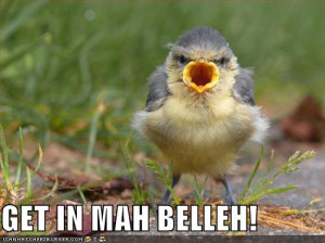 Funny Birds | New Photos 2012