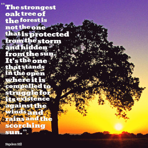 Quotes Picture: the strongest oak tree of the forest is not the one ...