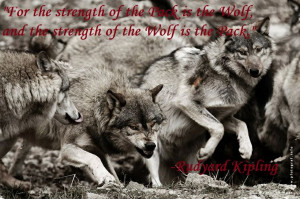 wolf quotes and sayings - Google Search