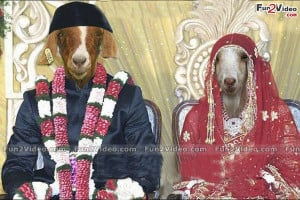 Funny Goat Indian Wedding This India Make Smile Laugh