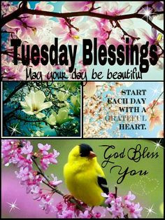 TUESDAY BLESSINGS. Start each day with a grateful heart. May your day ...