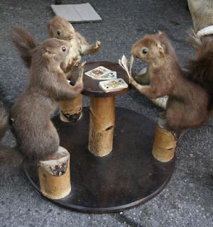 Funny Squirrel Casino