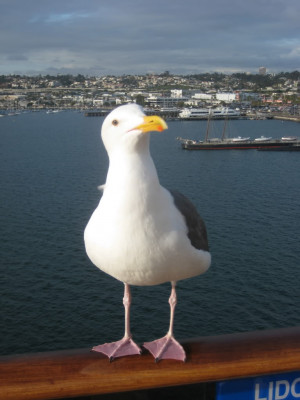 Funny Seagull Picture