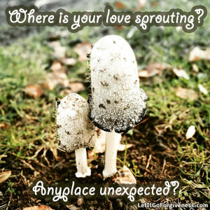 Let your love sprout in unexpected places