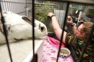 Bunny House shelters abandoned pet rabbits