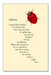 Ladybug--a good luck symbol, it's believed she first came to earth by ...