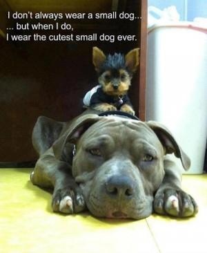 Big dog has a cute small dog as a ride along passenger.
