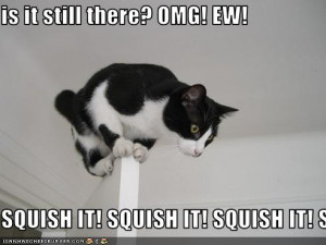 funny-pictures-your-cat-is-scared-of-spiders.jpg