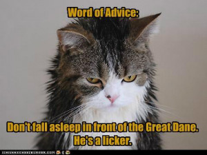 Funny Snoring Quotes