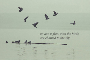 birds, bob dylan, quote, water