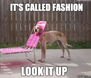 Funny-Pictures-2014-Fashion-Dog.jpg