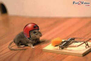 Funny Mouse With Helmet Trying To Cheat Mouse Trap and Get Food Which ...