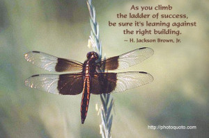 dragonfly sayings and quotes