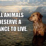 Quote-for-animals-lovers-150x150.jpg