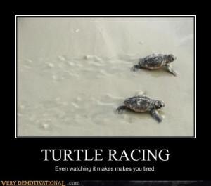One Slow Race #turtle #turtles #tortoise