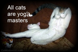 cat-yoga-humor-quote