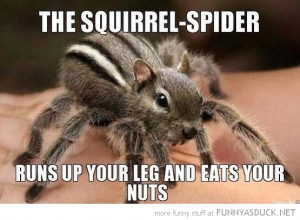 squirrel spider animal run up leg eat nuts funny pics pictures pic ...