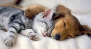 Lovely Kitten and Puppy Sleeping together Picture